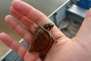O Pirralhos é amigo das tartarugas